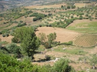 Sicily Farm Land