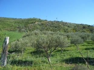 Sicily Farm Land for sale