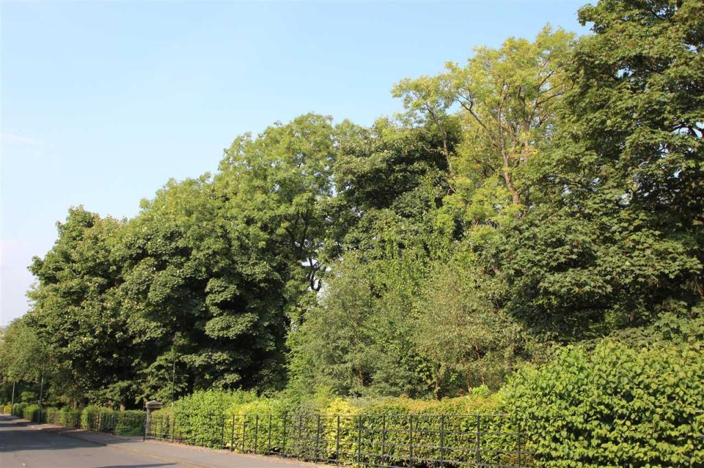 Consett Park