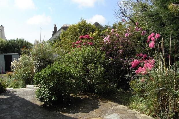 RIMG side garden.JPG