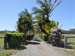 property for sale in 115 Corindi Park Drive, CORINDI BEACH 2456