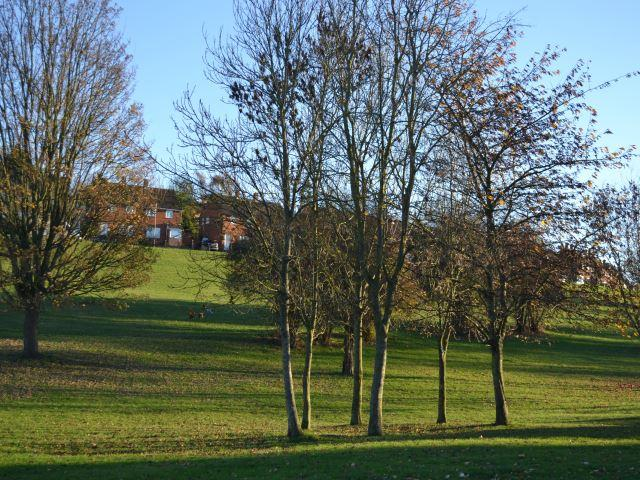 Views of Park