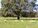 property for sale in 2782 Bonnay Linton Road, Inverell 2360