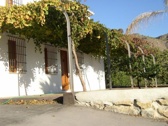 Vine covered terrace