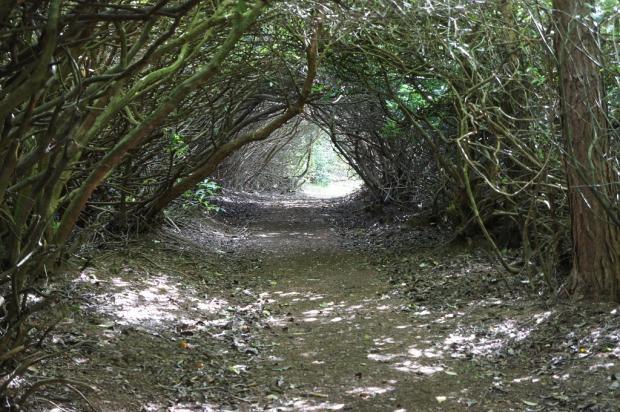 Rhodedendron Tunnel