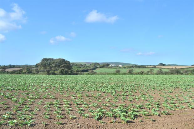 Rear rural view.JPG