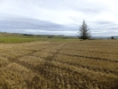 Plot in Site East of Killiesmont...