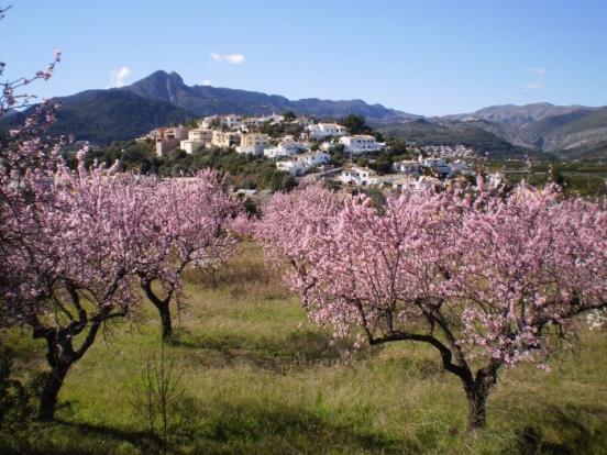 Orba in spring
