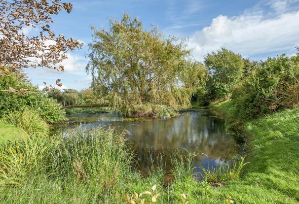 Pond Area 4.jpg