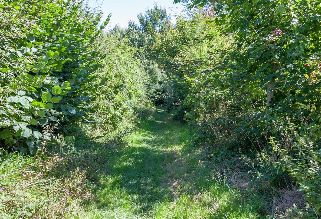 Woodland Path 2.jpg