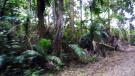 Lush Flora & Fauna