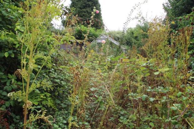Top half of garden