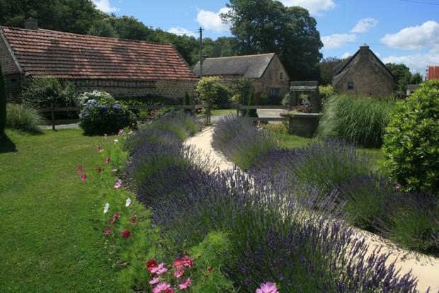 Pool path lavendars