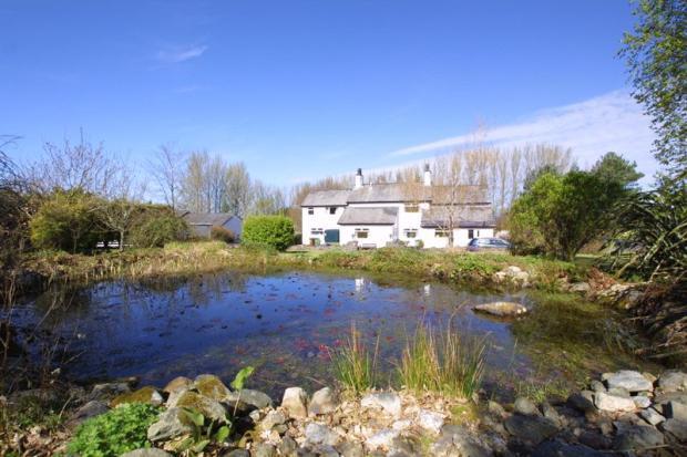 Lovely pond