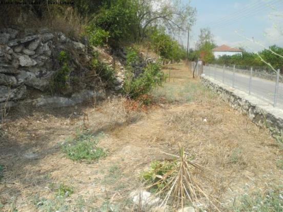 Possible herb garden