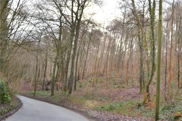 Local woodland