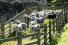Sheep pens