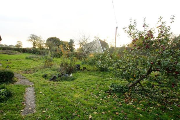 Orchard / possibl...