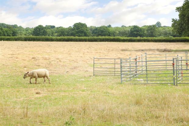 Common Farm 8.7 (3).