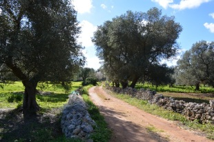 Farm Land for sale in Apulia, Brindisi...