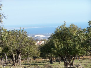Plot for sale in Limassol, Anogyra