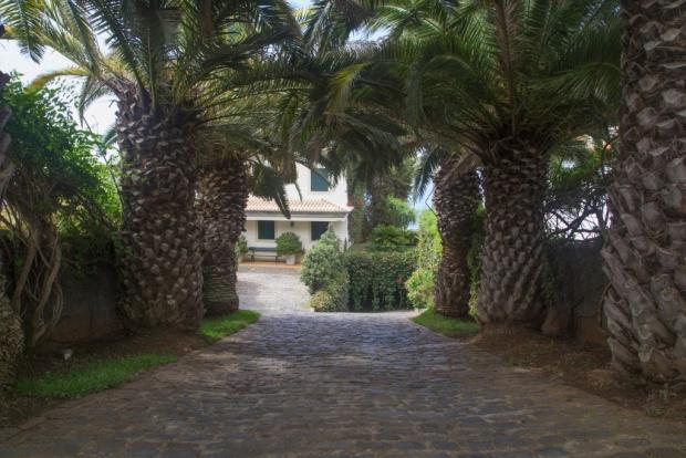 Palms on Driveway