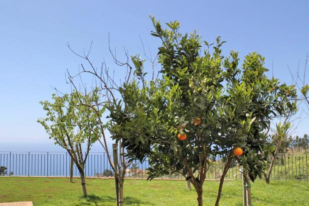 Fruit tree garden