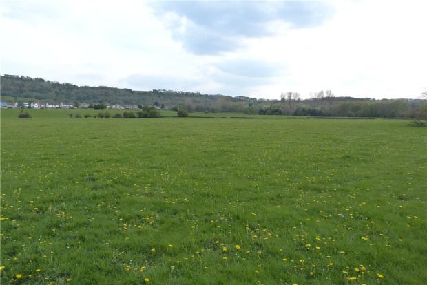 Freehold Grassland