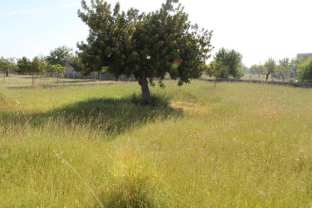 Landscape Lloseta