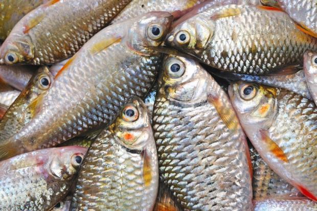 fresh fish, Mallorca