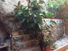 3 bed Character Property in Languedoc-Roussillon...