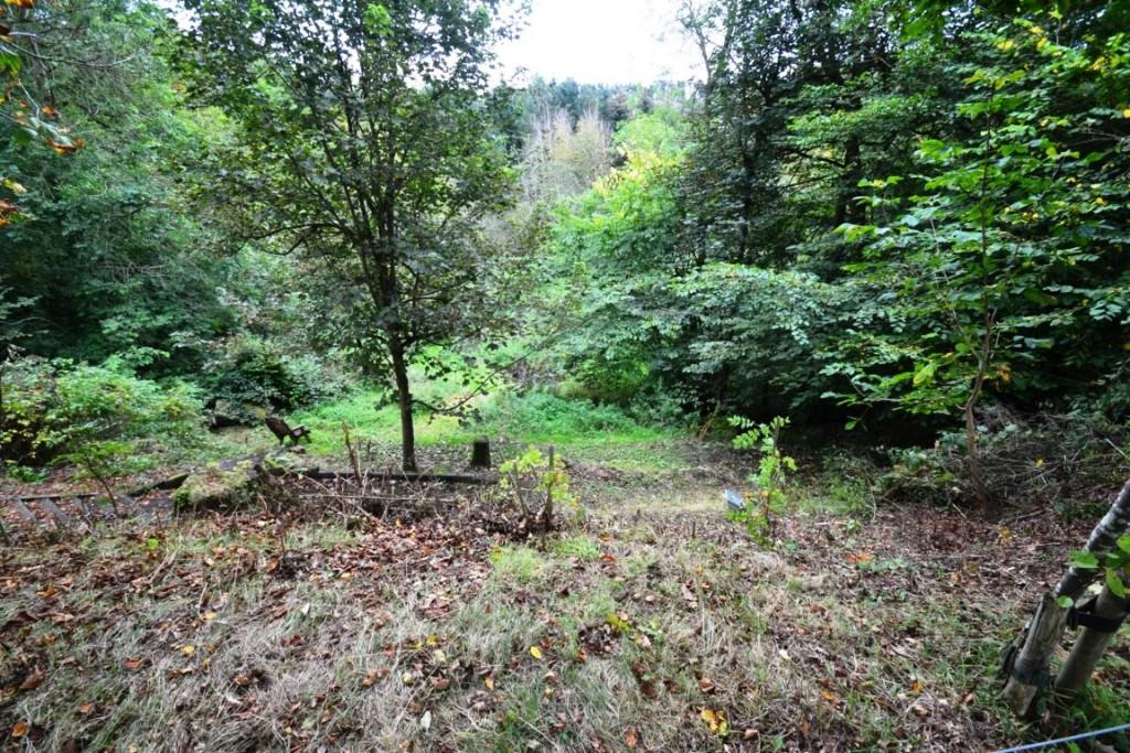 Woodland Garden area