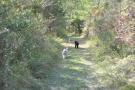 Private Dog Walk