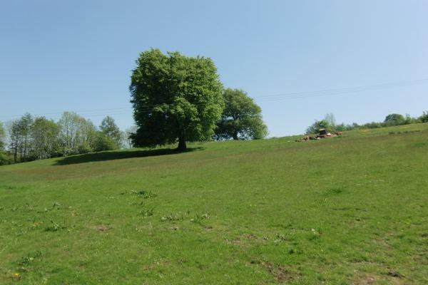 VIEW OF FIELD AT REAR