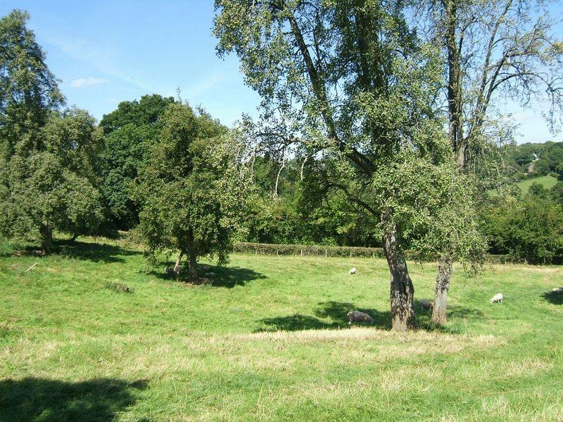Ancient orchard