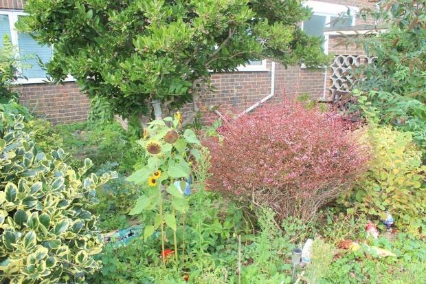 Alinora garden.jpg