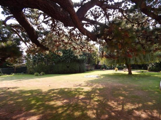 Communal Garden: