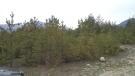 Land for sale in Blagoevgrad, Bansko
