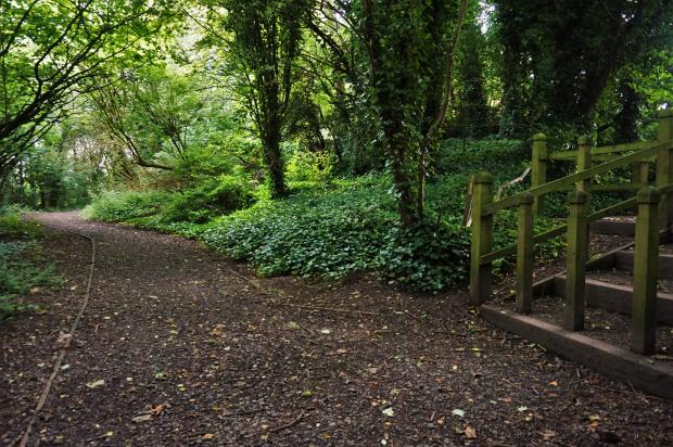 Local Area. Woodland walk.JPG