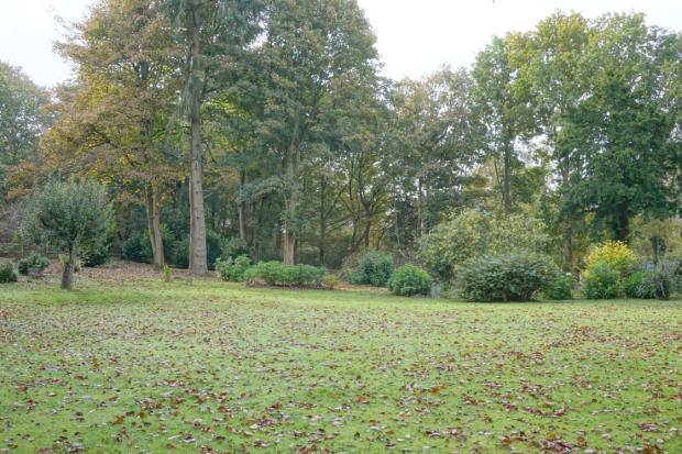 Wooded area to rear of garden