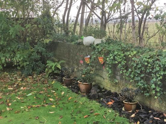 Backyard - photo 02.JPG