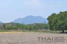 Land in Hua Hin