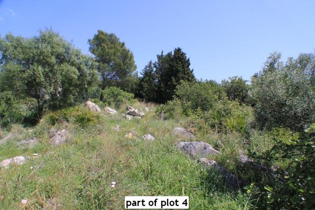 part of plot 4