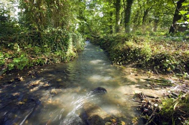 Bordering Stream