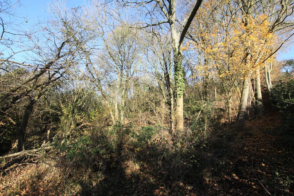 Wooded Coppice