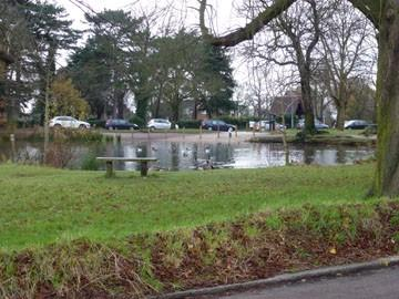 Views over duck pond