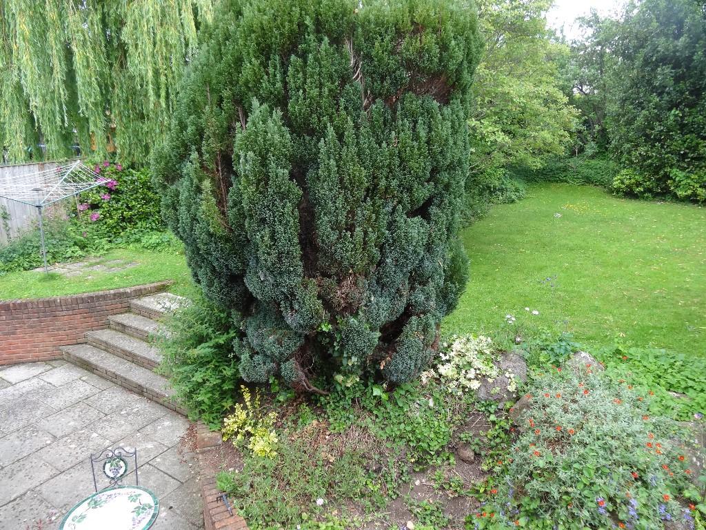 Existing Garden