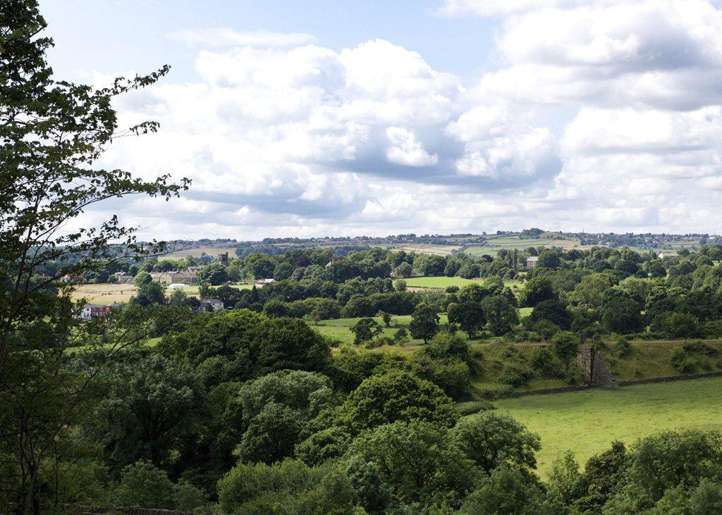 Bluebell Woods views