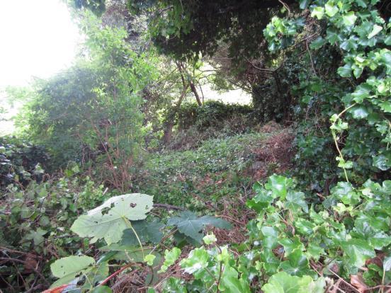 Unused Side Garden