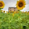 Farm House for sale in Montappone, Fermo...